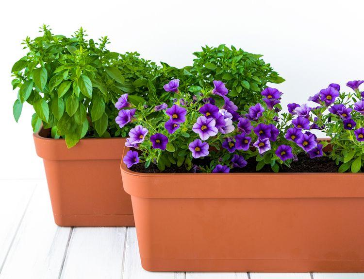 Jardiniere de printemps