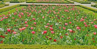 Massif de fleur Jardin a la francaise