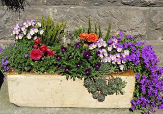 Plantes jardiniere plein soleil