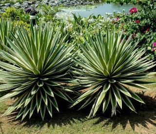 cactus plante pour Jardin exotique