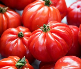 culture tomate marmande