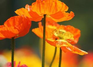 jardin Fleurs oranges