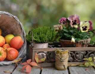 jardiniere automne