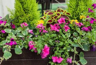jardiniere fleurs et petit conifere
