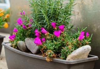 jardiniere fleurs et plantes aromatiques