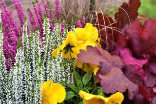 joli feuillage jardiniere automne