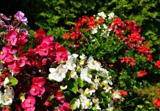 longue floraison pour jardiniere