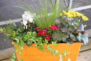plante pour jardiniere ombre