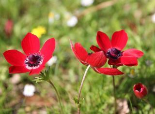 plante qui fleurit au printemps
