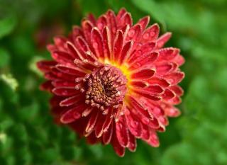 plante qui fleurit automne