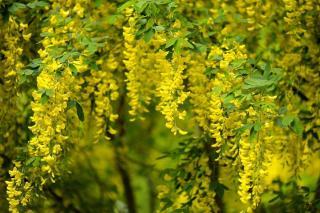 plantes Fleurs jaunes
