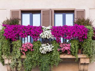 plantes grimpantes Vis a vis balcon