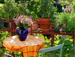 plantes pour Vis a vis balcon