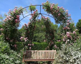 rosier jardin anglais