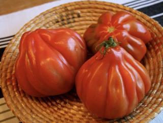 tomate Coeur de Boeuf en cuisine