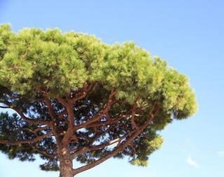 arbre ombrage pour jardin sec