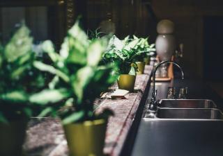 arrosage plante interieur vacances
