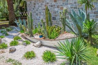 cactus jardin sec mineral