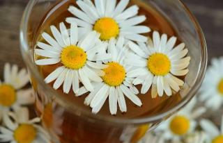 camomille fleur comestible