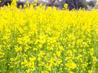 engrais vert pour potager bio