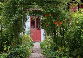 entreee maison avec pergola et plantes grimpantes