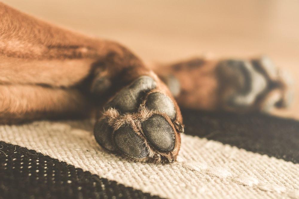 entretien griffe chien