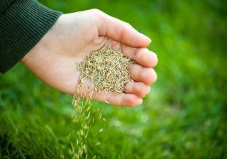 faire un gazon pelouse pas cher