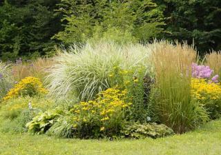 jolie plante pour massif sans entretien