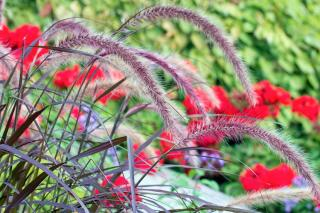 jolies plantes pas cher