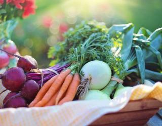 legume facile pour petit potager