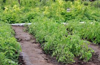 meilleur sol pour potager