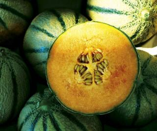melon vertu bienfaits