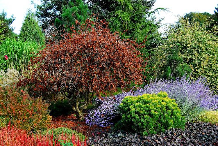 petit arbre pour petit jardin