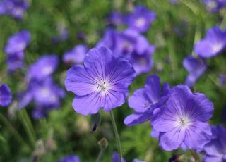 plante fleur sans entretien pour couvrir talus