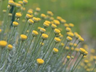 plante pour bordure sans entretien