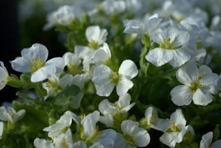 plante pour bordure soleil