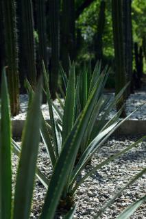 plante sans entretien pour jardin sec