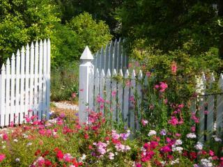 plantes portail amenagement jardin