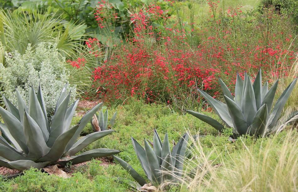 plantes pour climat sec jardin