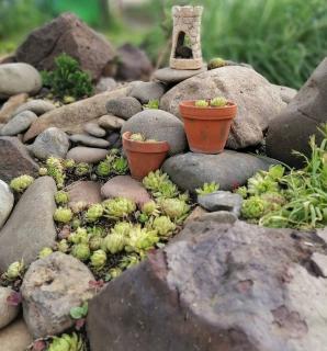 plantes pour rocaille pente butte pierre