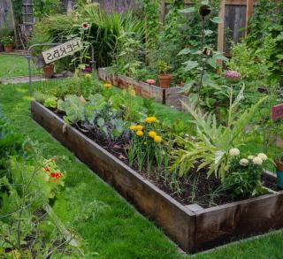 potager jardin en longueur idee