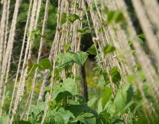 potager vertical pour petit jardin