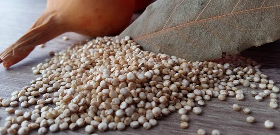 quinoa bienfaits vertu
