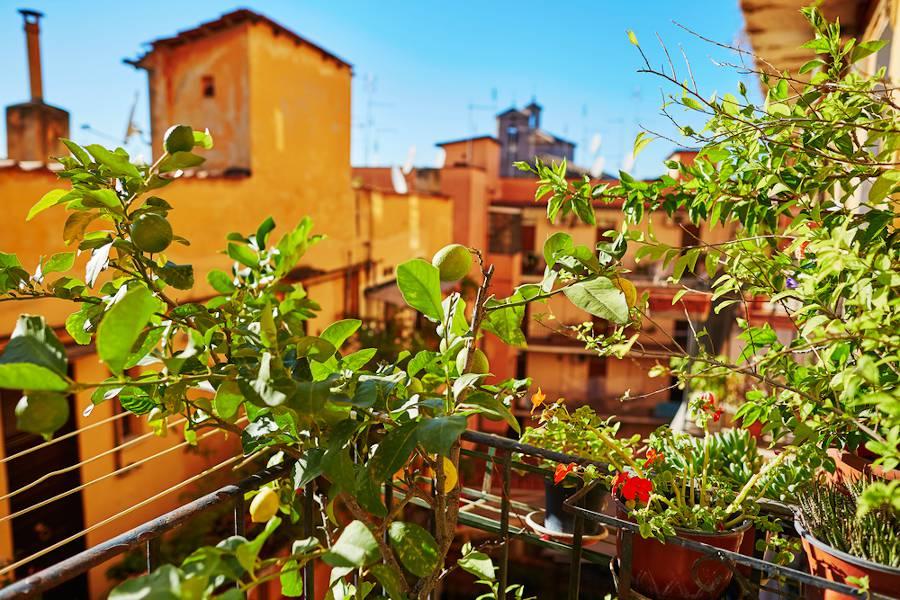 Fruitier pour balcon