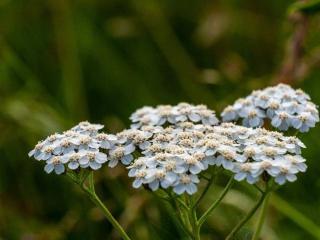 Plante qui resiste au vent foid