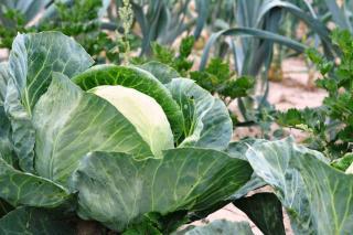 Rotation culture par type de legumes
