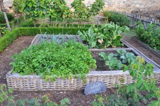 Rotation culture potager legumes