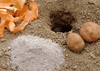 cendre engrais jardin