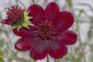 fleur tres parfumee