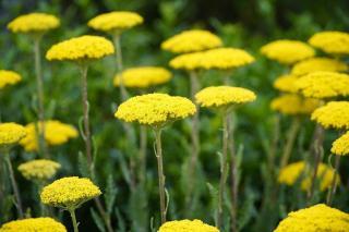 fleurs plein soleil